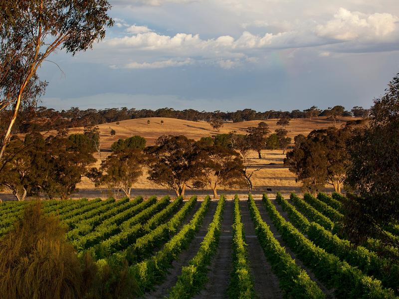 Mount Edelstone vineyard in the Eden Valley wine region