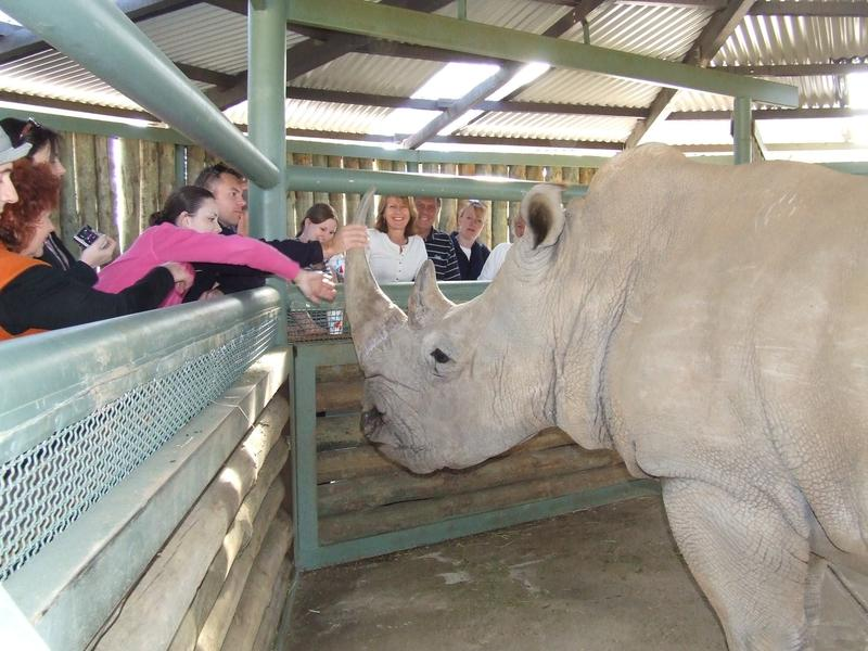 Get close to a Rhino, learn all about them !